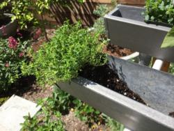 Rain gutter planters being filled with potting mix and planted with edible plants