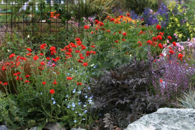 California Natives Garden