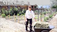 How and Why to Mulch Your Garden