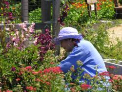 MG in garden
